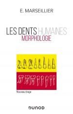 Les dents humaines - Morphologie