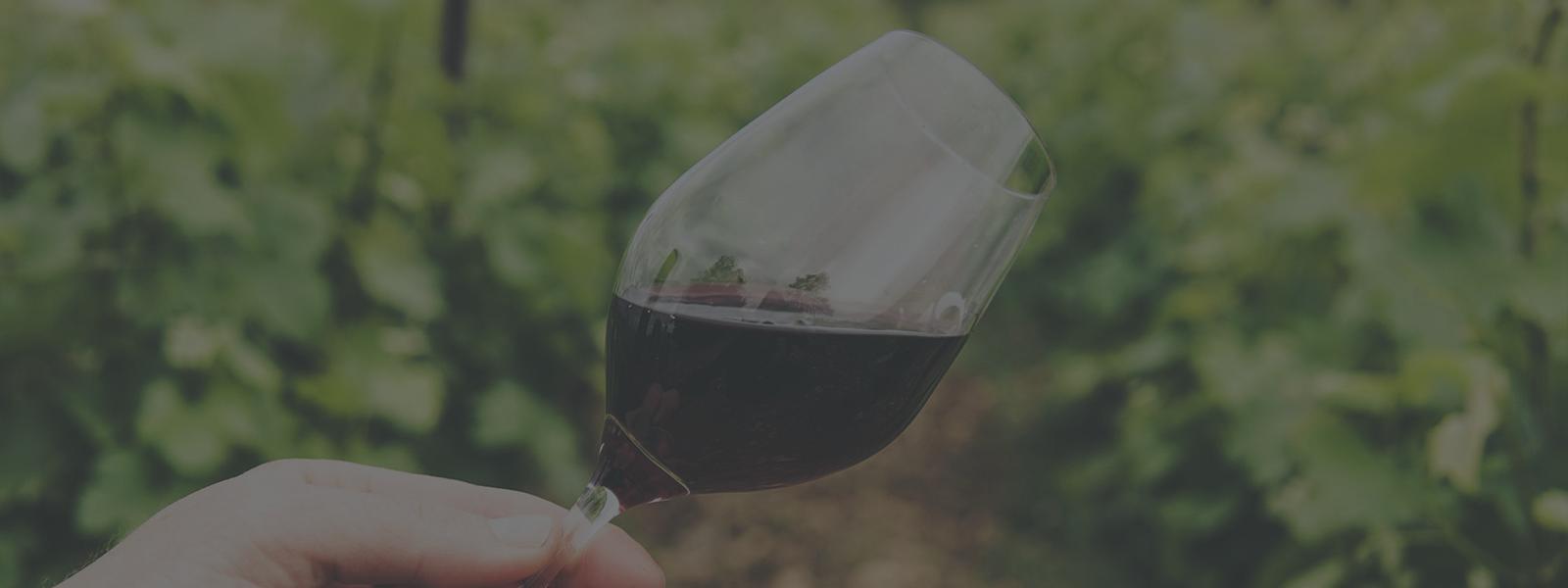 10 livres pour tout connaître sur le vin